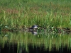 AWing-loon nest down position defensive