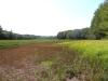 meadow01_12september2012
