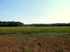 meadow02_12september2012