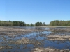 marsh_panorama_12may2012_small