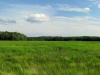 meadow_panorama_20july2013-2