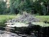 beaver_lodge_summer_2010
