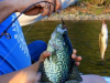 Clary_lake_crappie_spring_2015