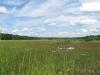 marsh_looking_north