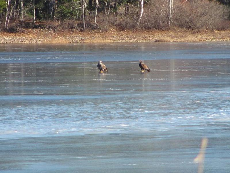 eagles-on-the-ice01