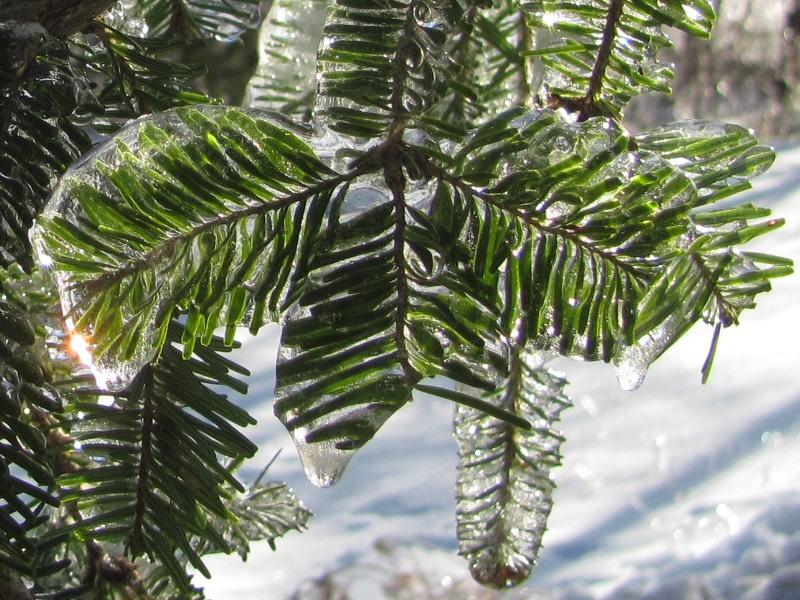 ice_storm_december2013-01