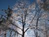 ice_storm_december2013-02
